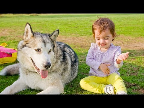 Funny Babies Talking to Dogs – Funny Dog and Baby Videos (2018)