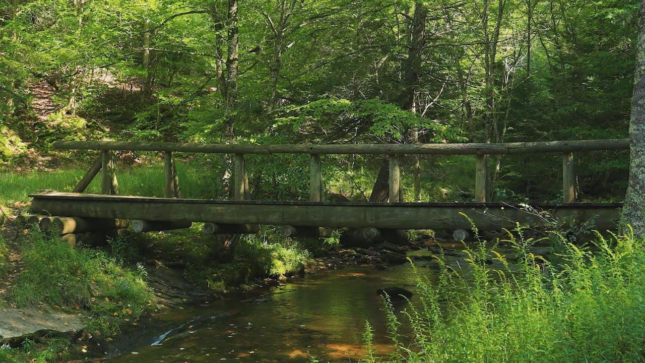 3시간 머리가 맑아지는 계곡 물소리 ASMR 🍀 수면유도, 새소리, 숲소리, 자연의소리, 휴식명상