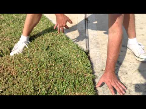 Test Lawn Damage For Chinch Bugs Vs. Drought Stress