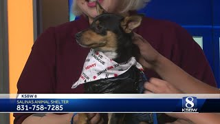 Pet of the week: Timon