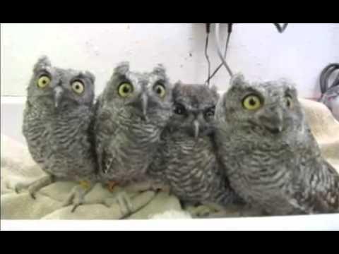смешные картинки с совами