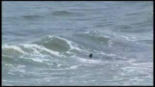 Lavallette Shark