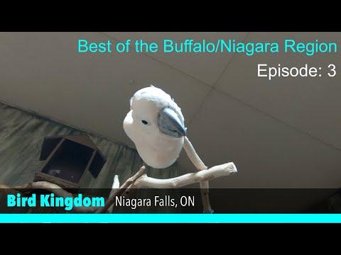 Bird Kingdom   Niagara Falls, ON   Best of the Buffalo/Niagara Region (EP 3)