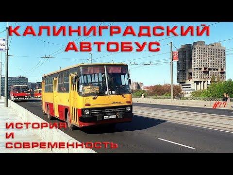 Калининградские автобусы.  История и современность.  #77