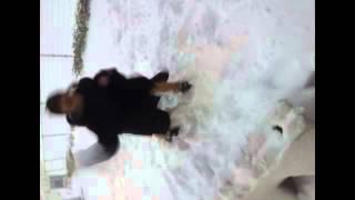 おしりんに雪を投げられ痛がる北川綾巴。 松村香織ぐぐたすより。