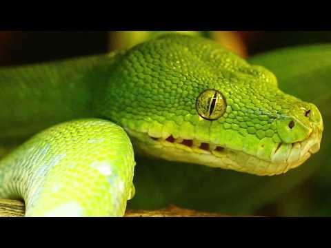 Green Snake Dream - Dream Interpretation & Symbols - Snakes