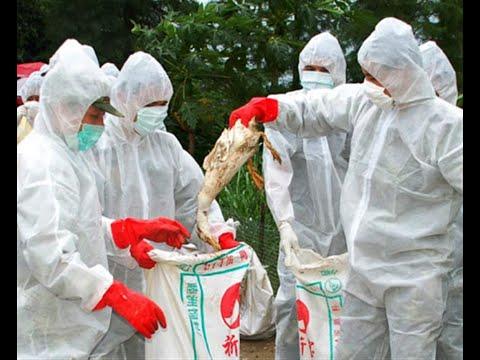 جنوب أفريقيا ترصد فيروس H5N8 في طيور بحرية  - نشر قبل 3 ساعة