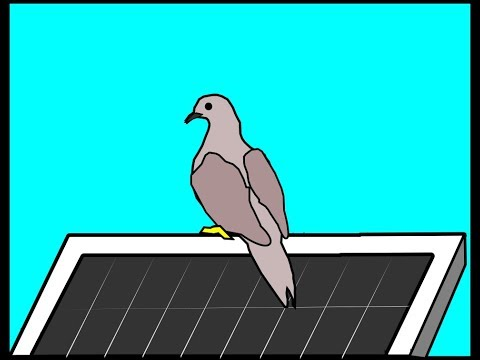Protect your solar panels against bird stuff