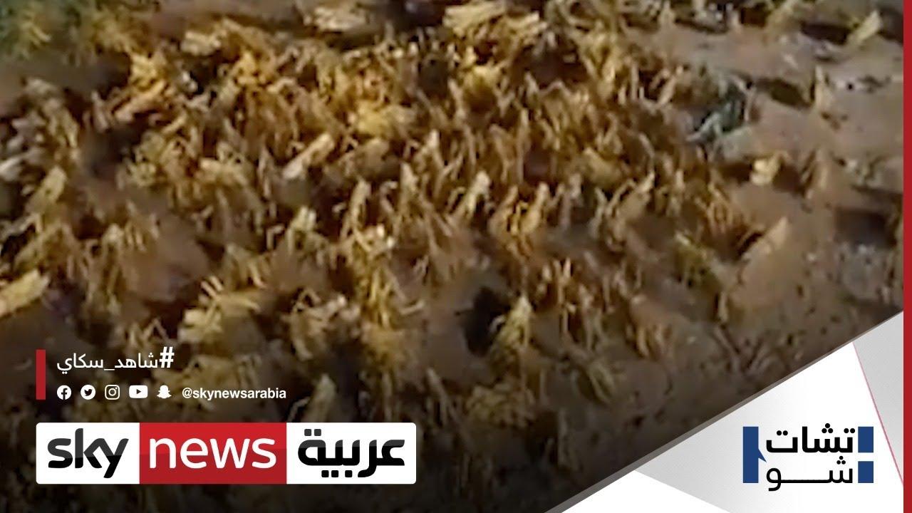 أسراب الجراد تغزو مناطق عربية عدة وفيديوهات توثق الحدث  - نشر قبل 59 دقيقة
