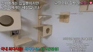신림 다세대 거실 - 플레이캣 고양이 투명 놀이터 원목…
