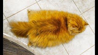 アタマだけじゃなくって身体のほうも目を覚まさなきゃね。ストレッチからのすとーんが好きな猫