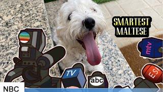 Smartest Dog   Maltese   Maggie's Diary   Smartest Puppy