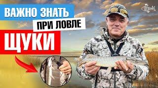 Что нужно при рыбалке на щуку Рыбалка на щуку с берега Рыбалка на щуку Одесса Советы Shorts