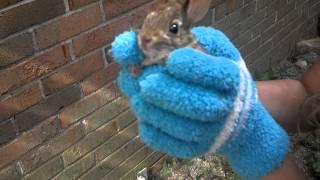 Wild Bunny rescue