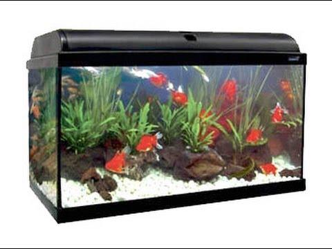 C mo hacer un filtro para acuarios casero hd youtube for Filtro para pecera