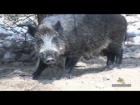historia de Juan Mingolla pasos largos from YouTube · Duration:  3 minutes 12 seconds