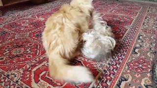 Смотреть кошки против собак, или собаки против кошек
