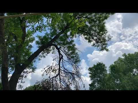 Дерево соседа замахнулось на ваш участок: можно пилить или нет?