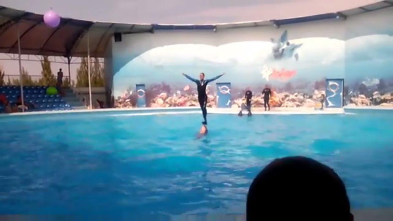 Дельфинарий Оскар, Самое лучшее. часть 2.
