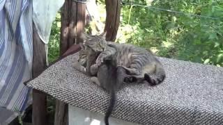Фрося и Котята-живут...