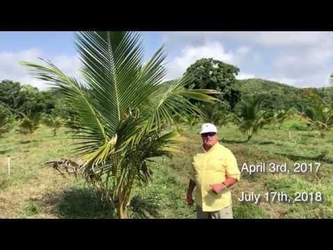 Farmfolio's CEO Peter Kern visits Coconut Farm
