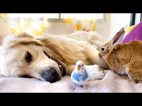 Can a Dog be friend of a Bird and a Rabbit? [Cutest Pets Ever]