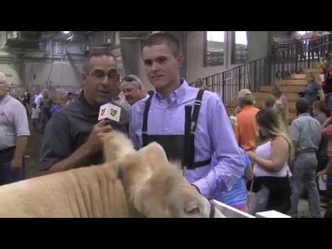 2014 Grand Champion Steer Ohio State Fair
