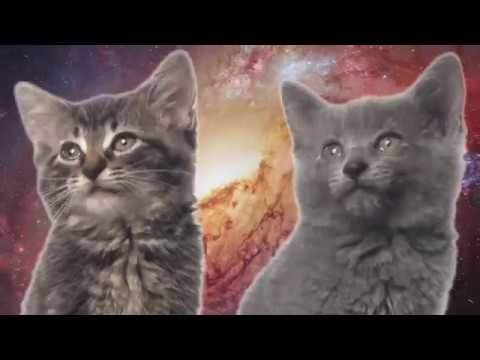 Space Cats - Magic Fly - In reverse