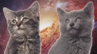 space cats   magic fly   in reverse