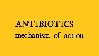 beta lactam antibiotics