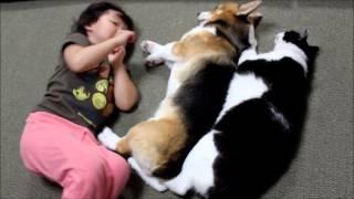 反則級のかわいさ!「子供+犬+猫」で川の字になってみた
