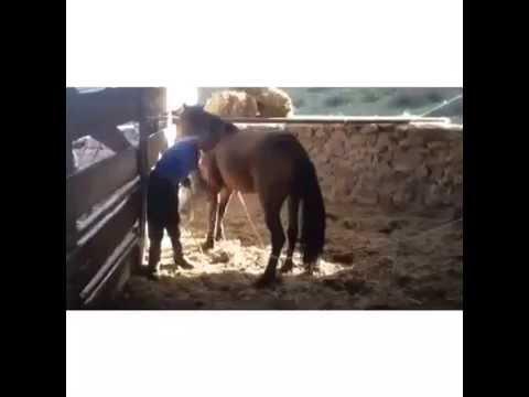 horse at tepmesi felaket adamı komalık ediyor