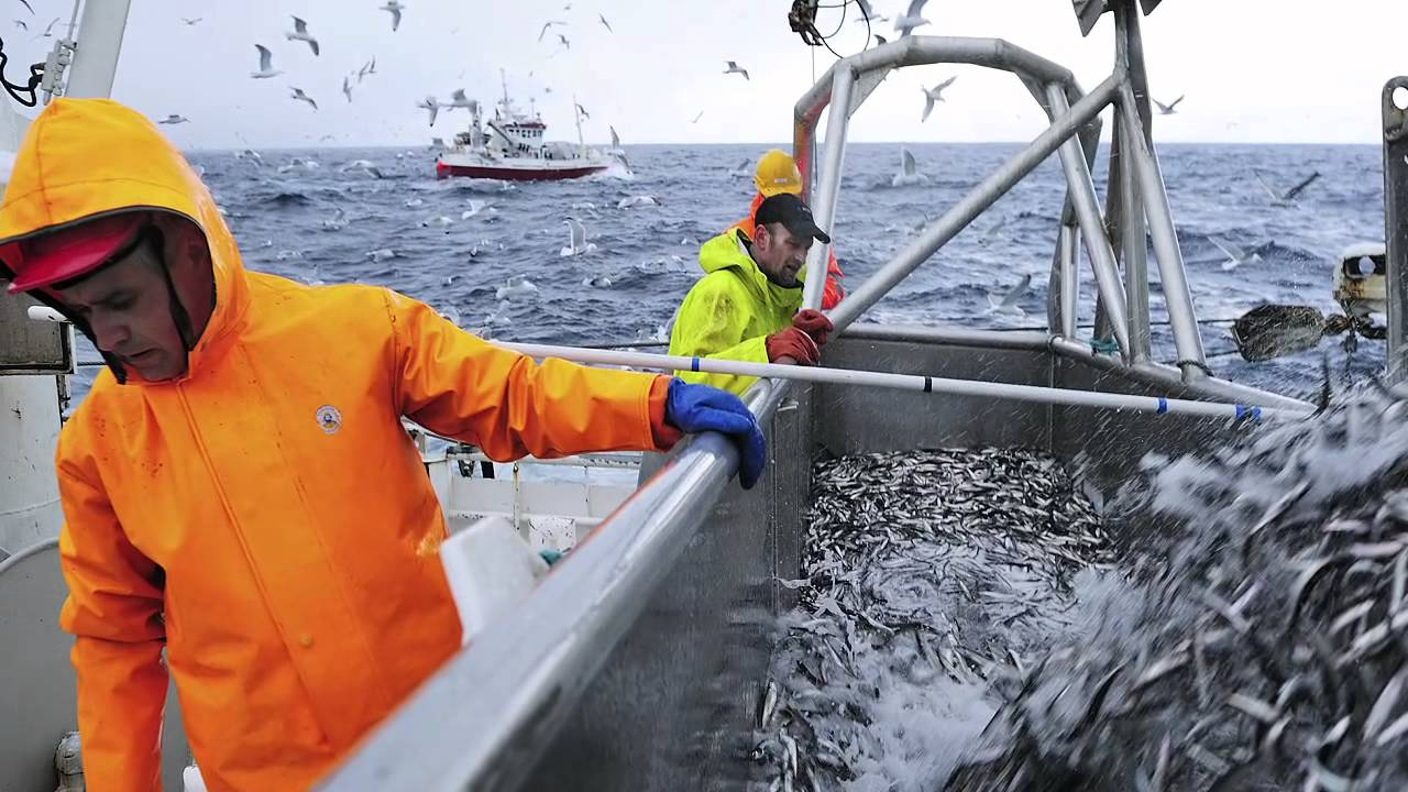Capelin fishing in norway youtube for Fishing in norway