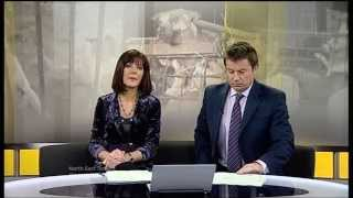 Discussing the Dog Meat Trade on ITV Tyne Tees TV News Programme.