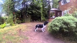 Dog jump GoPro
