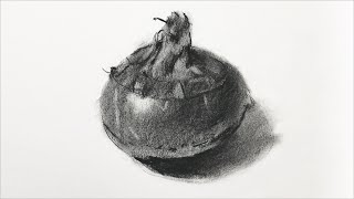 Basic Drawing: Charcoal drawing of a water chestnut
