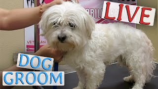 Watch LIVE Pet Grooming HERE! - SHARE - LIKE - LOVE - SUPPORT - CONTRIBUTE