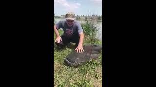 Рыбалка и огромный Сом