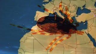 Fiebre hemorrágica de Crimea Congo