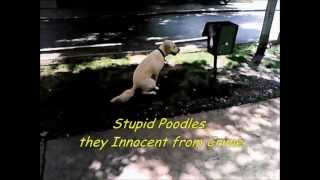Poodles -  Amnon Kabuly (+subtitles)