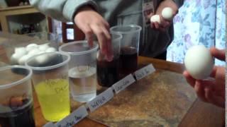 Egg School Science Experiment
