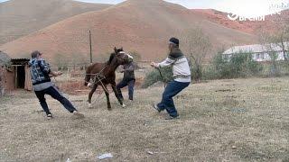 Полевая стоматология для лошадей в Кыргызстане