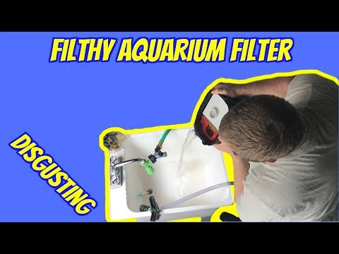 Cleaning A Canister Filter * The RIGHT Way * (How To)