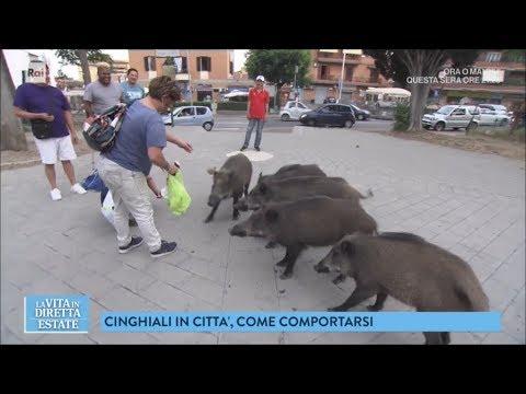 Roma, una città bestiale: i cinghiali per le strade - La vita in diretta estate 22/06/2018
