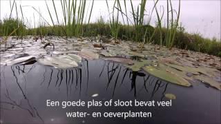 onderwater in Utrecht