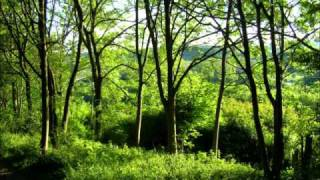 Llwyn Onn ( The Ash Grove ) - Cor Meibion Treorci Choir