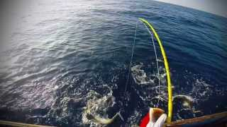 SOCOTRA FISHING HELL