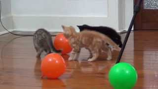 baby kittens playing with ballons - funniest kitten videos