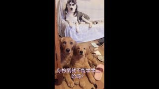 [2019]Funny videos of cute dogs and cats 094