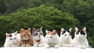かご猫Blog http://kagonekoshiro.blog86.fc2.com/blog-entry-10976.htm...